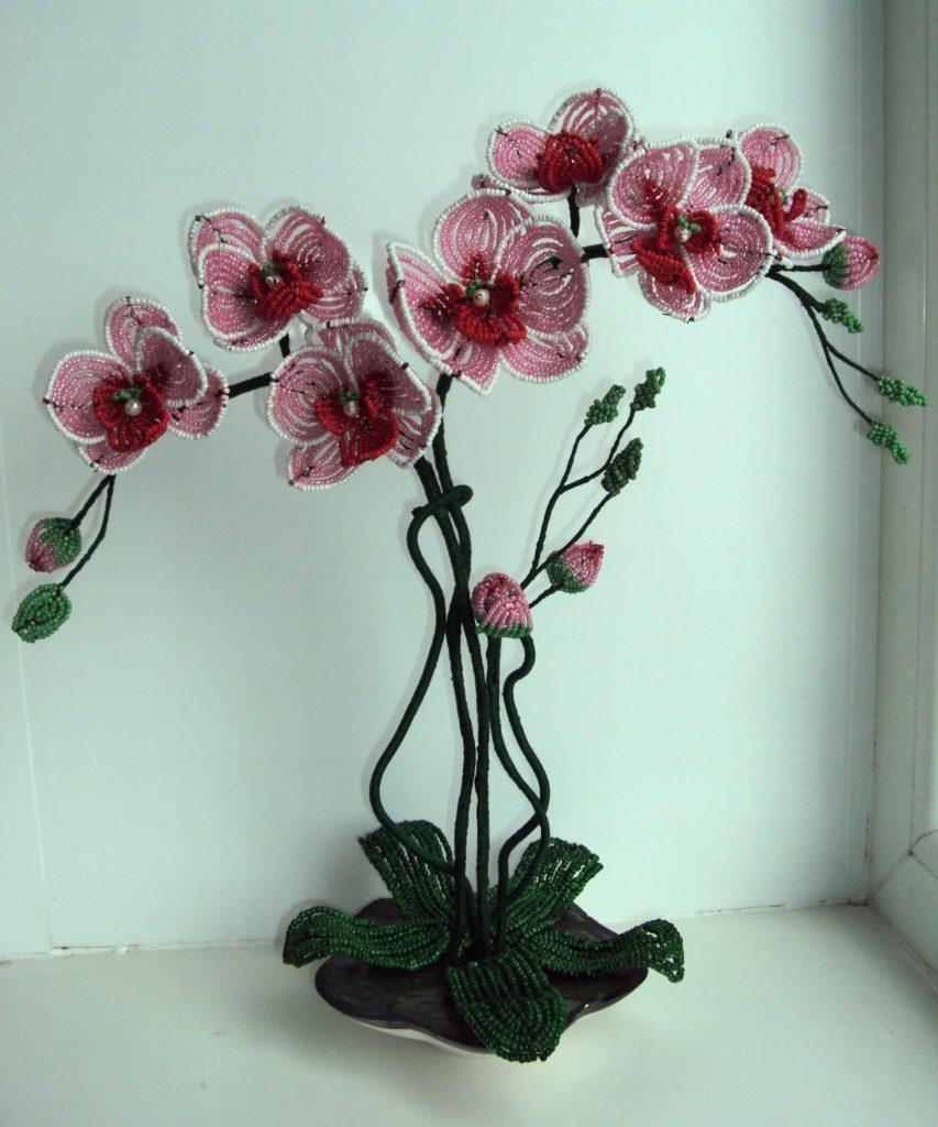 Орхидея Смирнова Анастасия,12лет